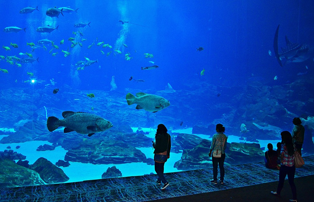Get a front row seat of the ocean's creatures at the Georgia Aquarium.